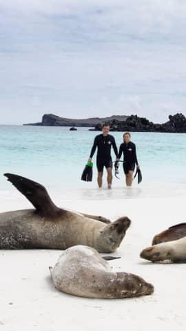 Luxus pur am Strand der Galapagos-Inseln. Seelöwen sonnenbaden sich.