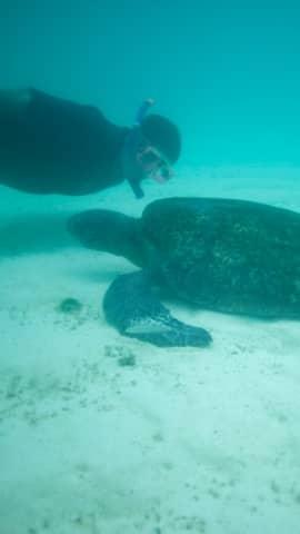 Tauchen im Tauchparadies Galapagos. Schnorcheln mit Wasserschildkröten und Tauchen mit Walen, Haien und Rochen gehört hier dazu.