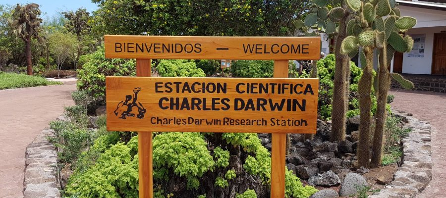 The Charles Darwin Research Station is a tortoise breeding station located Santa Cruz Island