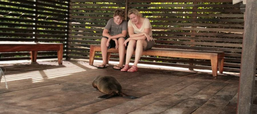 A woman and her son have a close encounter with a young sea lion