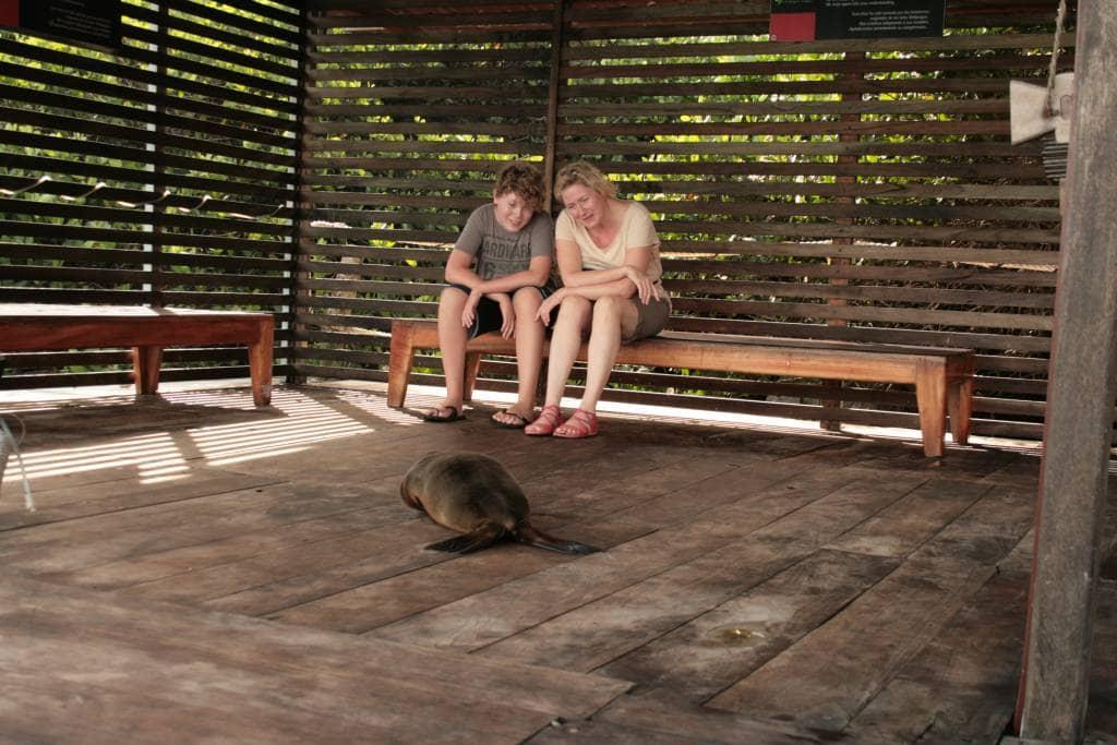 Die Tierwelt ganz nah auf Galapagos erleben