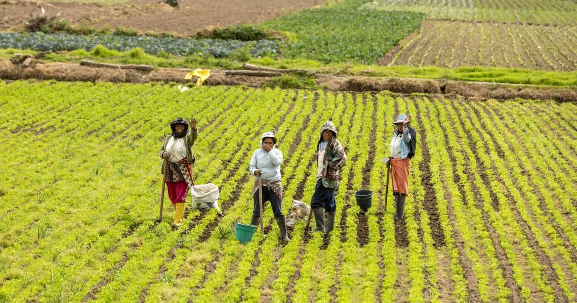 Die Felder an der Küste - Ecuador-Reisen – Küste und Traumstrände entdecken