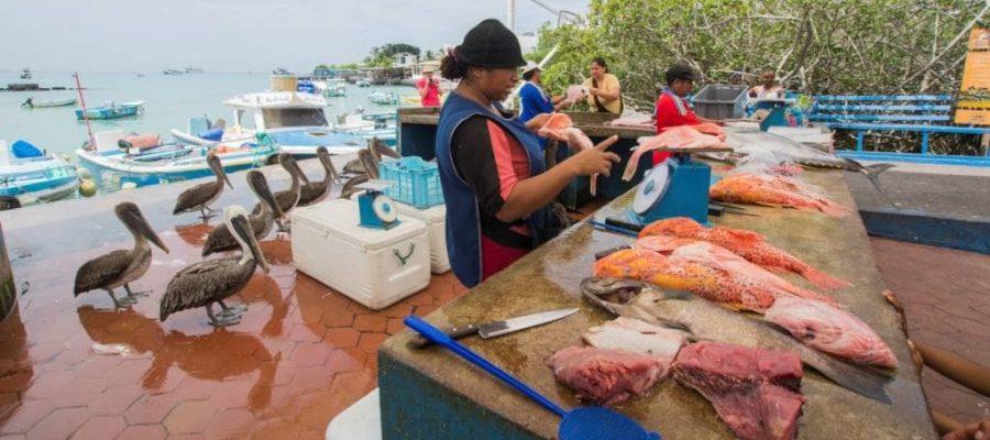 Fangfrischer Fischverkauf am Hafen vom Urlaubsörtchen Puerto Ayora in Galapagos