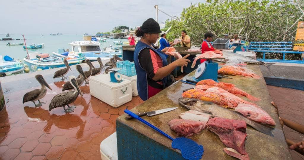Fischverkauf am kleine Hafen vom Urlaubsort Puerto Ayora in Galapagos