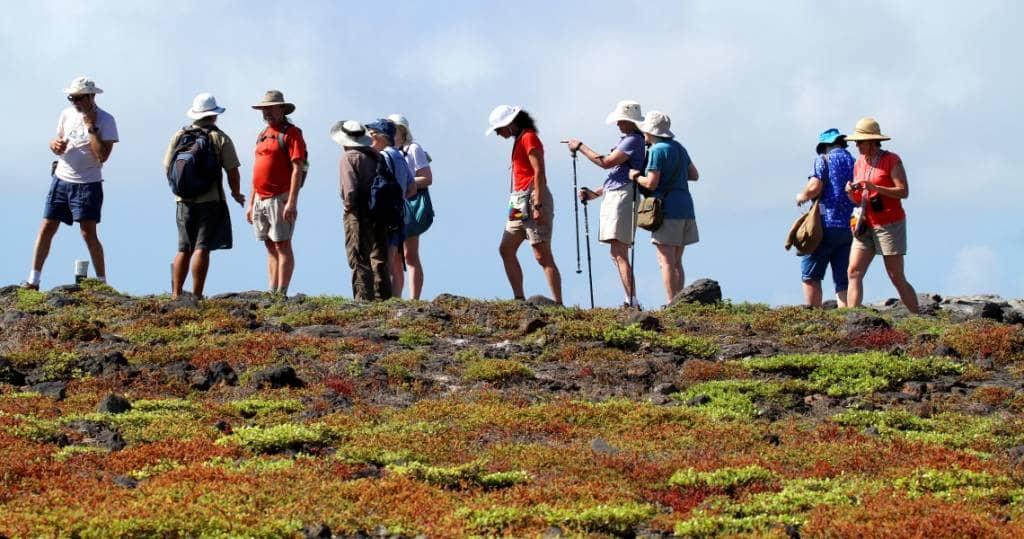 Ausflüge in der Kleingruppe auf die Galapagos-Insel Plaza Sur