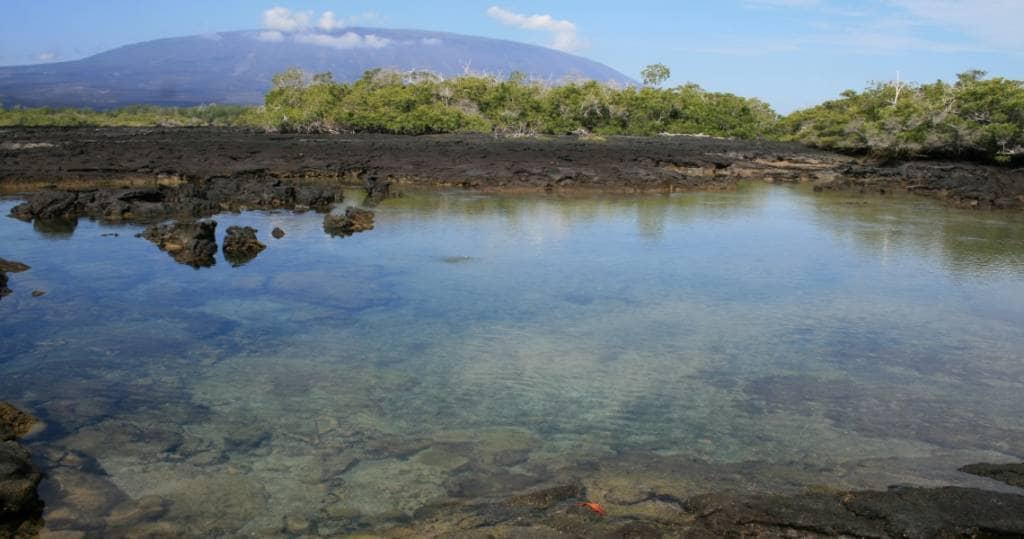 Galapagos PRO Fernandina Vulkan beim Ausflug vom Kreuzfahrtschiff aus