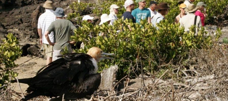 In einer Kleingruppe mit einem Naturführer auf der Galapagos-Insel Nord Seymour unterwegs