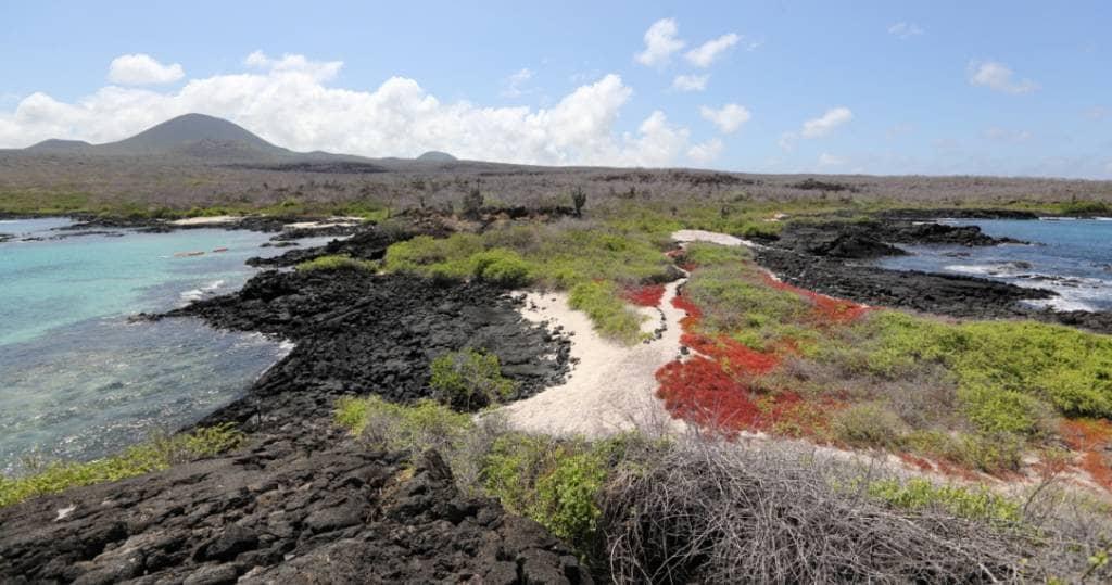 Die bunte Landschaft auf der Galapagos-Insel Floreana