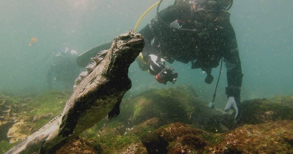 Galapagos PRO - Beobachten Sie Meerchsen beim Algen abgrasen unter Wasser