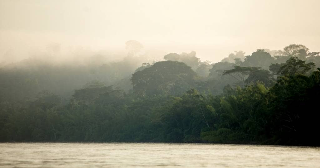 Galapagos PRO Nebel im Amazonas im Yasuni Nationalpark in Ecuador