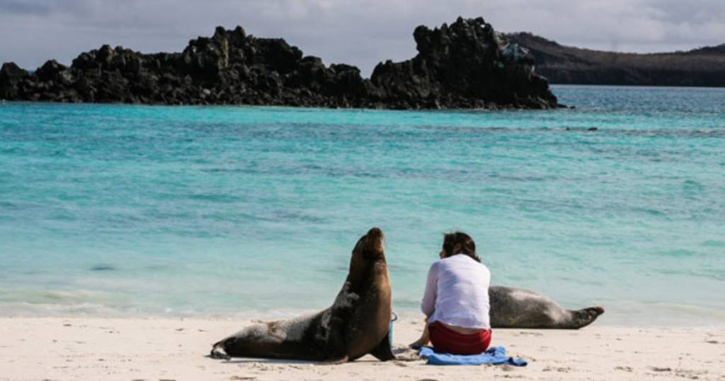 Neue Freunde am Strand der Galapagos-Insel Floreana finden