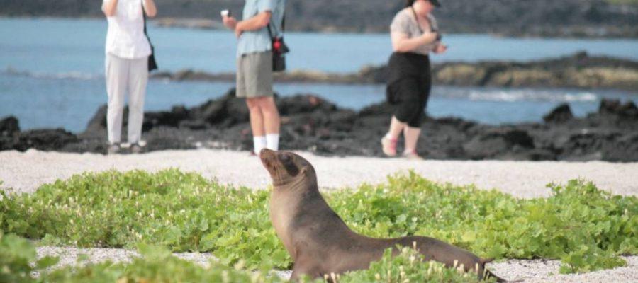 Seelöwen begrüßen die Besucher am Strand der Galapagos-Insel Fernandina