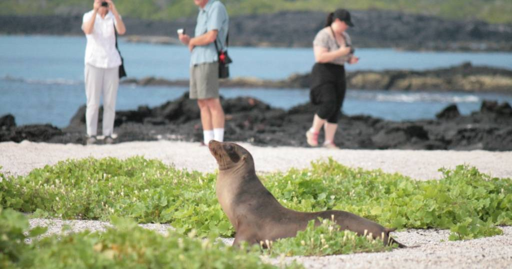 Galapagos PRO Seelöwe zum greifen nah auf Galapagos-Insel Fernandina per Kreuzfahrt