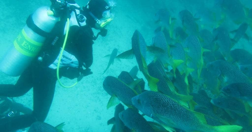 Galapagos PRO Taucher und gelb-blauer Fischschwarm unterwasser in Galapagos