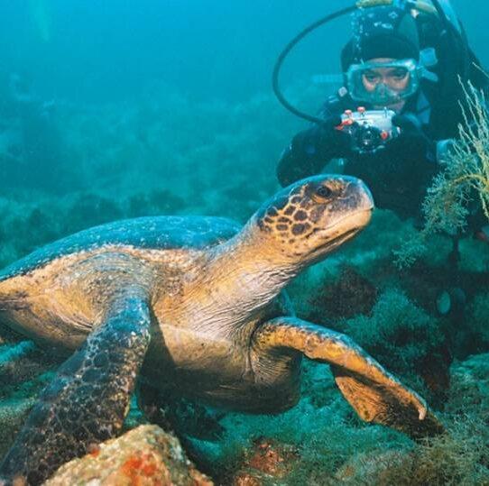 Galapagos PRO Tauchparadies Galapagos - Entdecken Sie Meeresschildkröten beim Tauchen und Schnorcheln