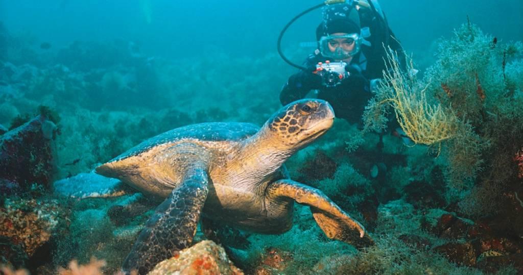 Galapagos PRO Tauchparadies Galapagos Meeresschildkröten beim Tauchen und Schnorcheln