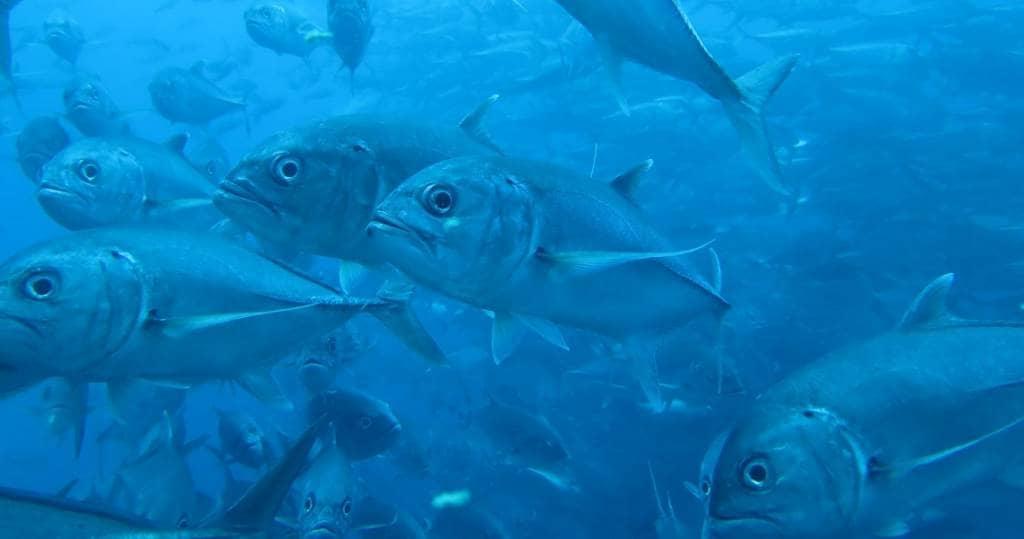 Galapagos PRO Tauchsafari oder Tagesausflüge in Galapagos