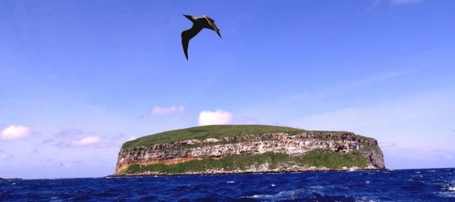 Darwin Island is a remote divers paradise in the Galapagos Islands