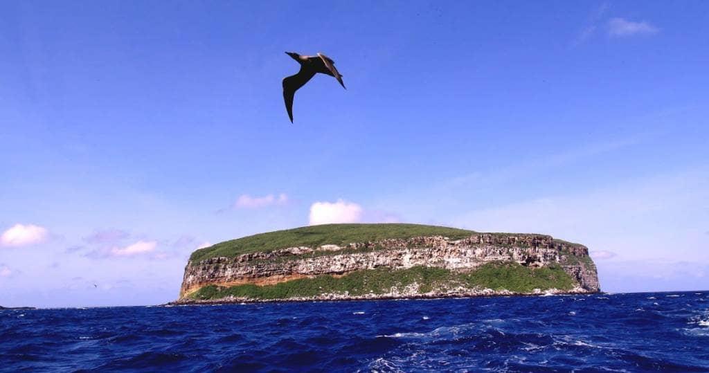 Galapagos PRO Tauchsafari zur Insel Darwin im Norden von Galapagos