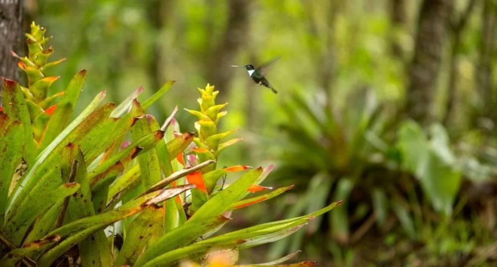 Galapagos PRO Tierwelt um Mindo in Ecuador