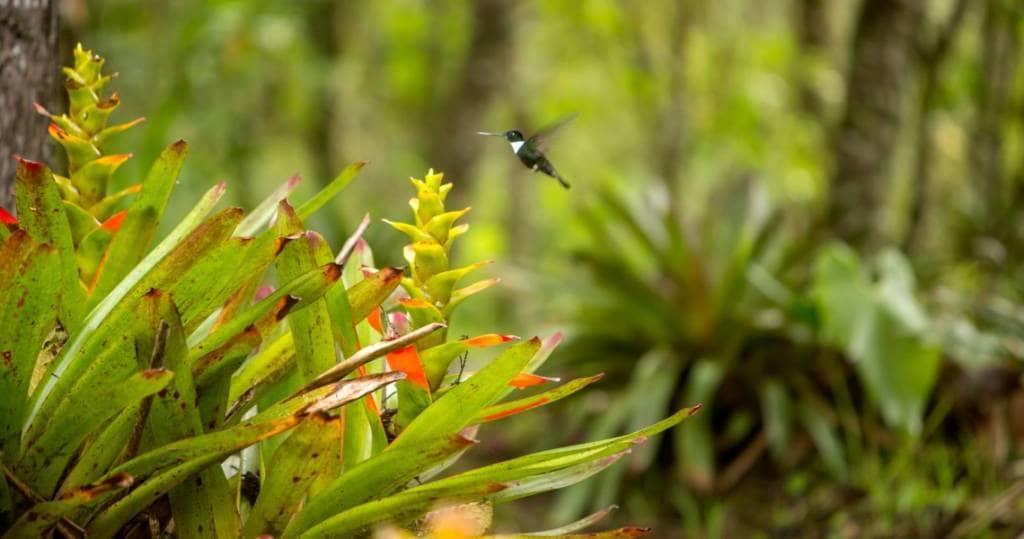 Galapagos PRO - Tierwelt um die Stadt Mindo in Ecuador