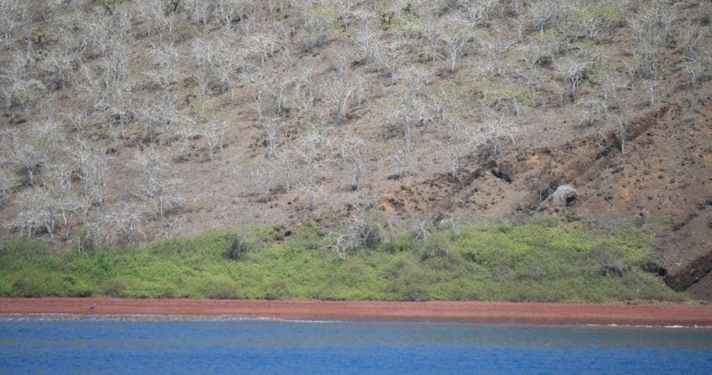 Das typisches Farbenspiel der Galapagos-Insel La Rábida