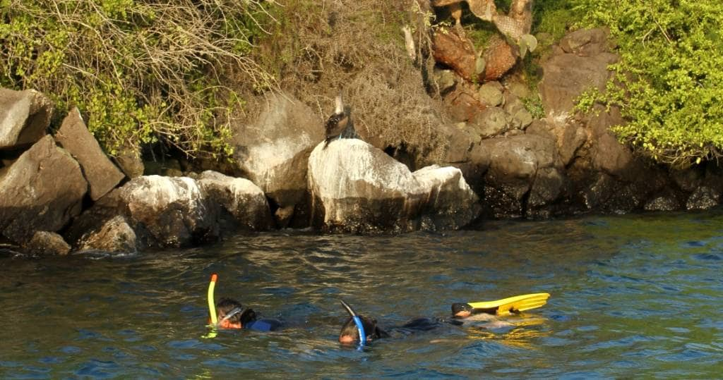 Entdecken Sie die Unterwasserwelt der Galapagos-Insel Plaza Sur beim Schnorcheln