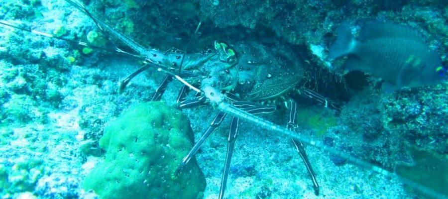 Galapagos PRO - Entdecken Sie die einzigartige Fauna beim Tauchen in Galapagos