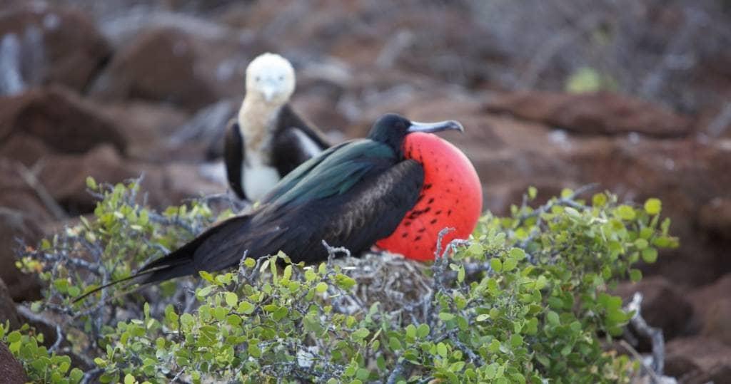 Vogelvielfalt auf der Galapagos-Insel Nord Seymour