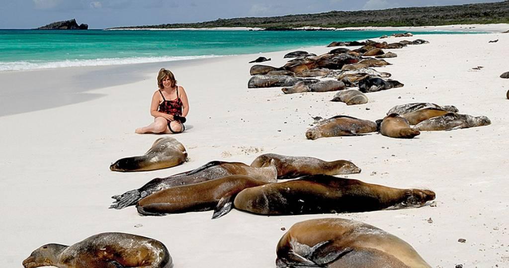 In Mitten einer Seelöwenkolonie auf der Galapagos-Insel Floreana