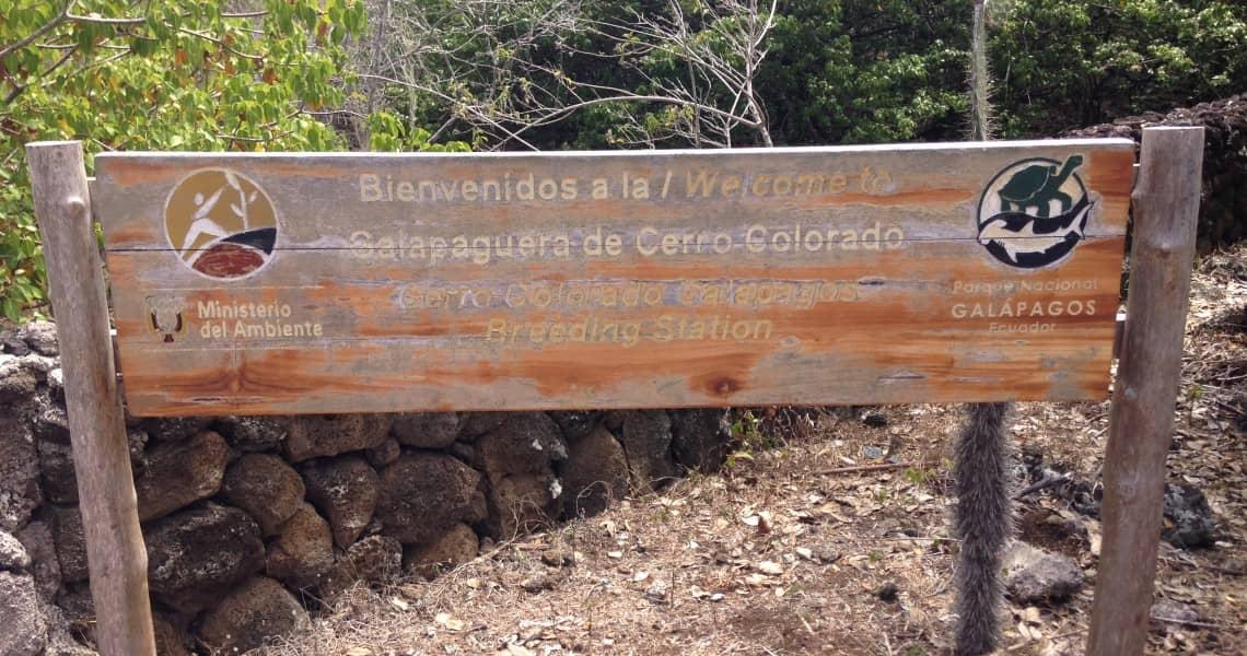 Auch auf San Cristóbal werden Schildkröten herangezogen. Genesis heißt der jüngste Nachwuchs.