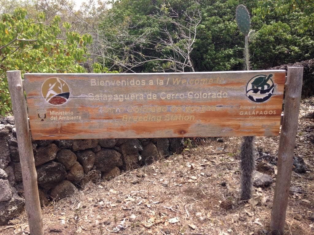 Auch auf der Galapagos-Insel San Cristóbal werden Schildkröten herangezogen.