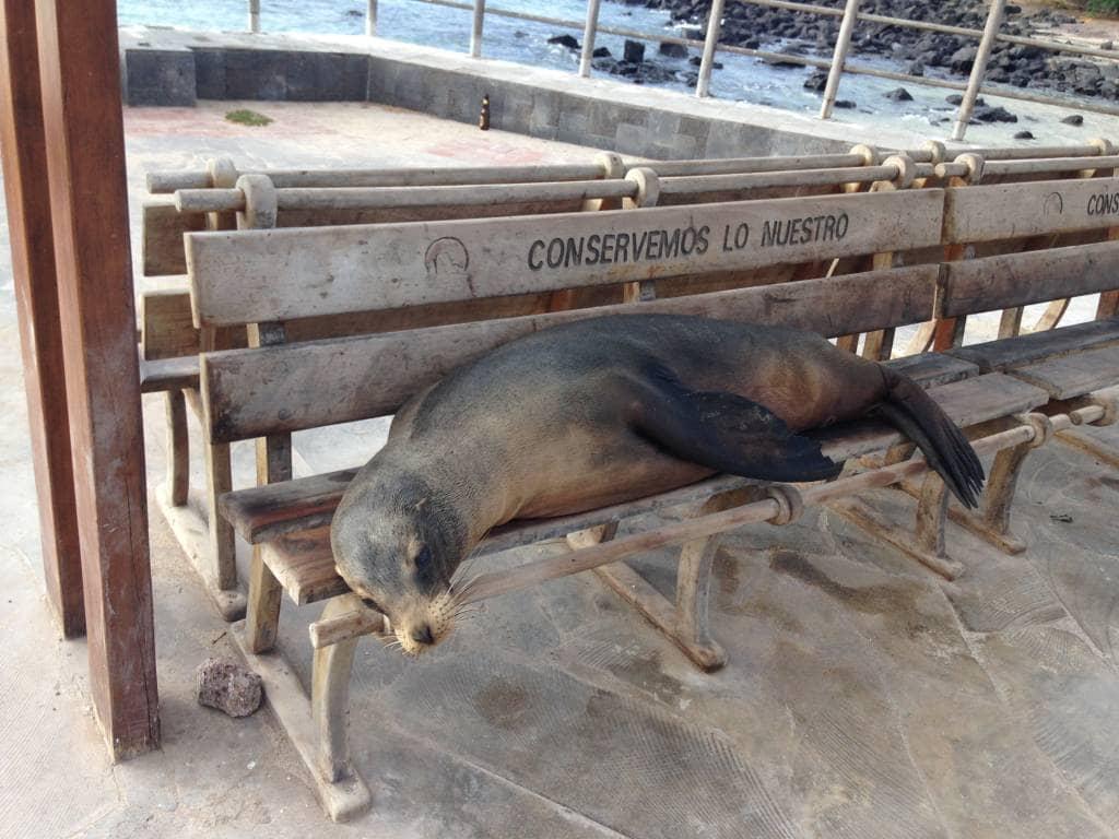 Die Galapagos-Inseln sind der Kiez der Tiere