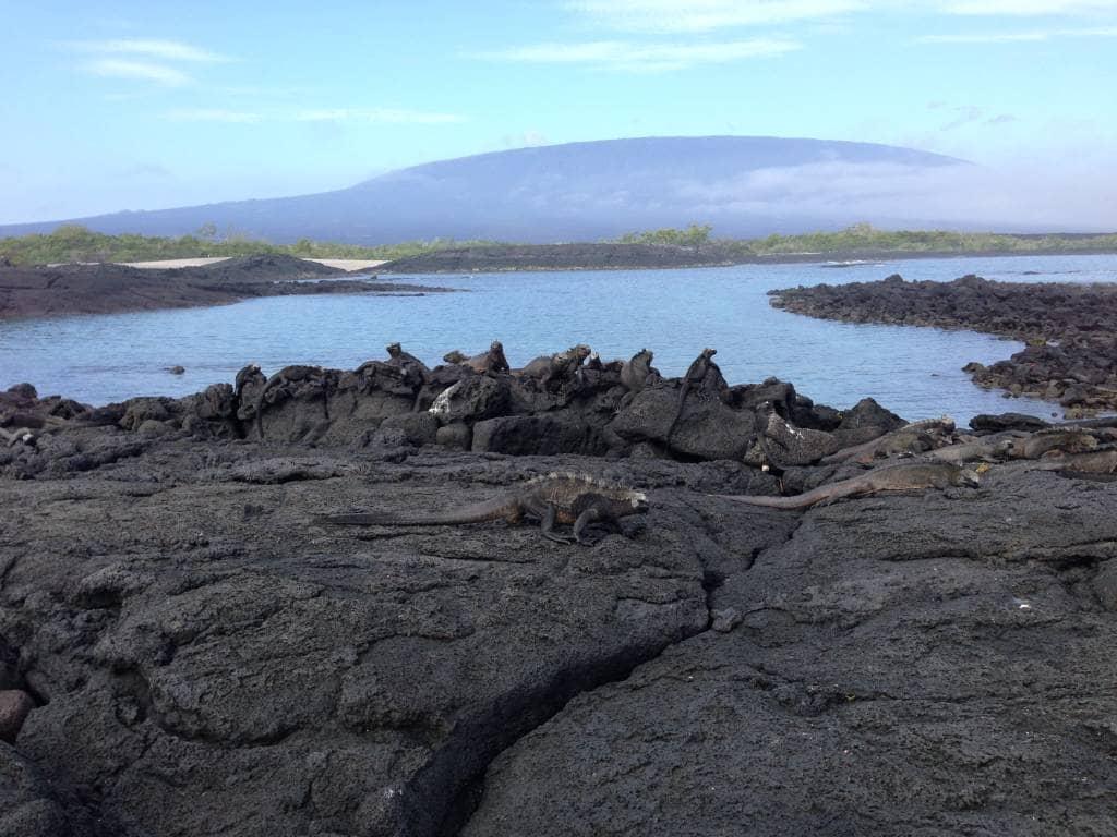 Blick auf den Vulkan der Galapagos-Insel Fernandina