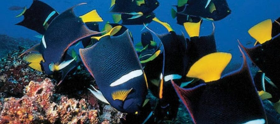 Dive amongst the schools of tropical fish in the Galapagos Islands