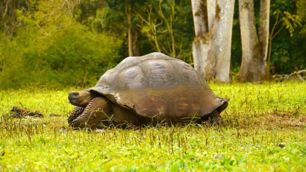 Galapagos-Inseln
