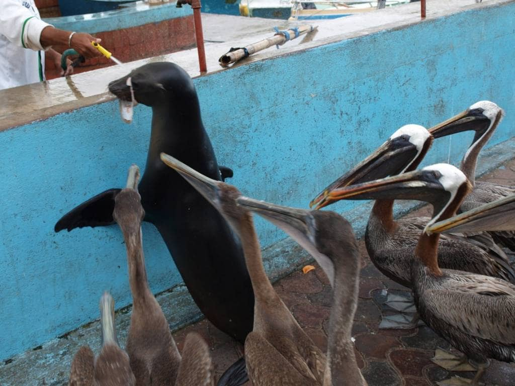 Was gibt es zum Mittagessen? - Neugierige Inselbewohner auf Santa Cruz, Galapagos
