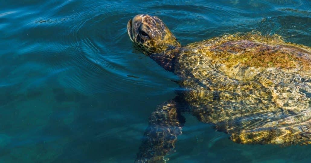 Den Perfekten Galapagos Inseln Strandurlaub Auf Der Insel Isabela Erleben Galapagos Pro Bringt