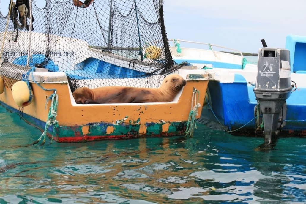 Es gibt immer Platz zu entspannen in diesem Tierwelt Paradies - mit Seelöwen ausruhen