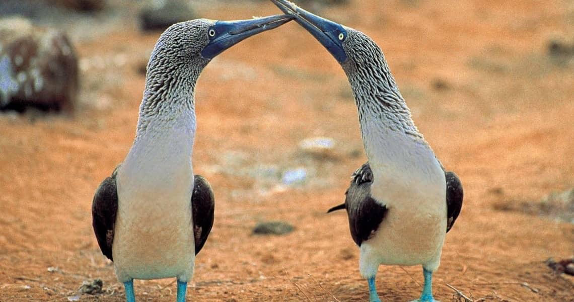 Die Galapagos-Inseln sind ihre Heimat