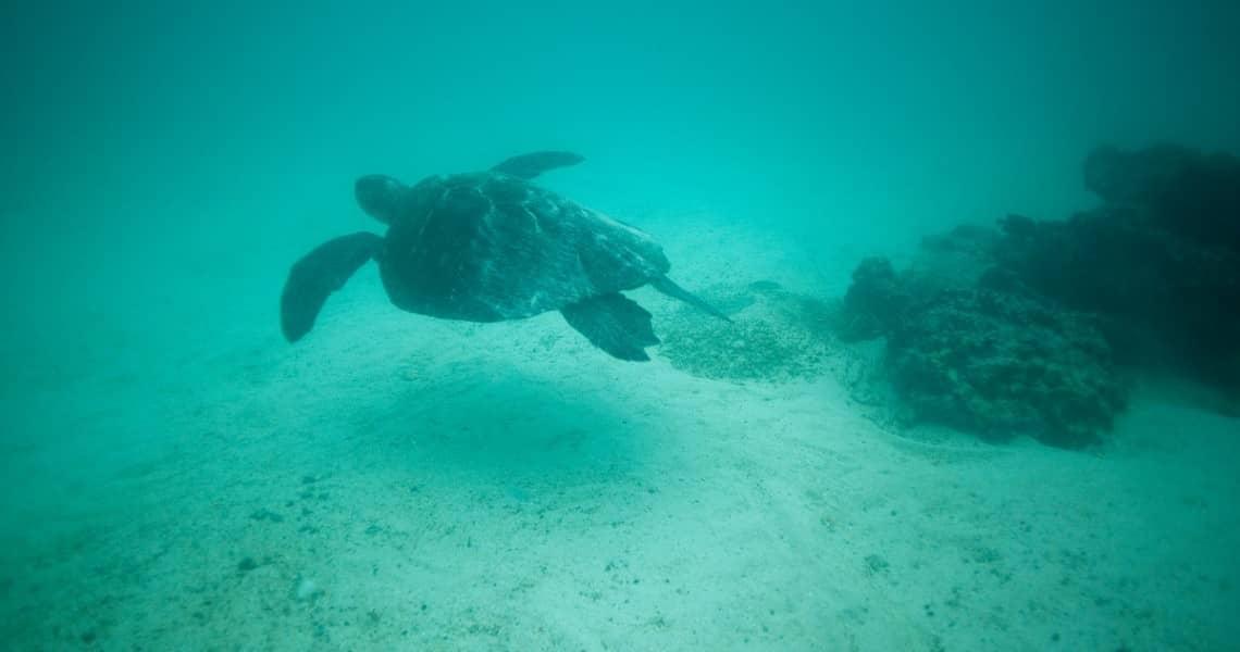 Unterwasserwelt auf den Galapagos-Inseln