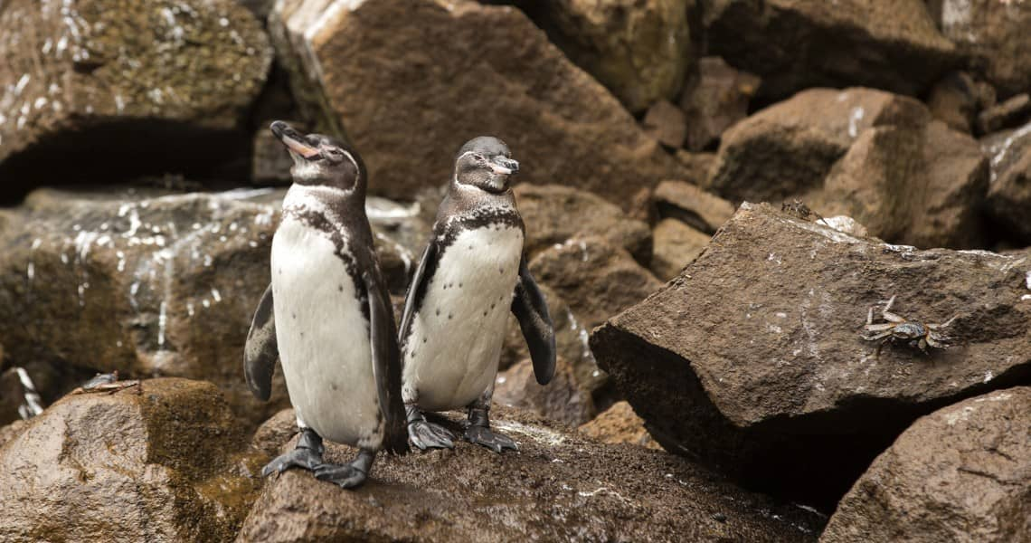 Kreuzfahrt Gay auf die Galapagos Inseln