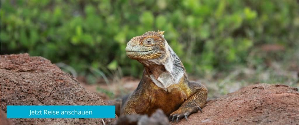 Entdecken Sie die einzigartige Tiervielfalt auf den deutschsprachig geführte Reisen durch Ecuador und die Galapagos-Inseln