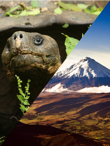 Ecuador and Galapagos Islands Combined Tours -- Galapagos Tortoise and Cotopaxi