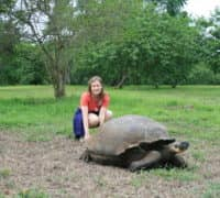 giant tortoises very close to tourists on Santa Cruz in Galapagos