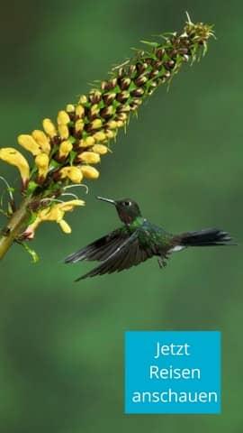 Für den bekennenden Vogelliebhaber: Ornithologische Reisen nach Ecuador und die Galapagos Inseln