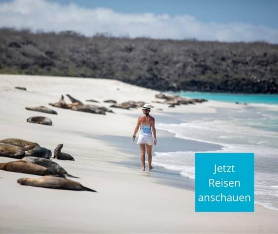 Die schönsten Galapagos Reisen gestalten Sie individuell mit Galapagos PRO. Dann spazieren auch Sie bald am Seelöwenstrand in Galapagos.