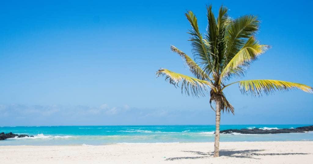 Palmenstrand auf Galapagos-Insel Isabela