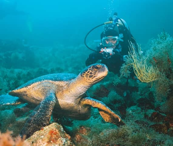 Diving tours with Galapagos PRO