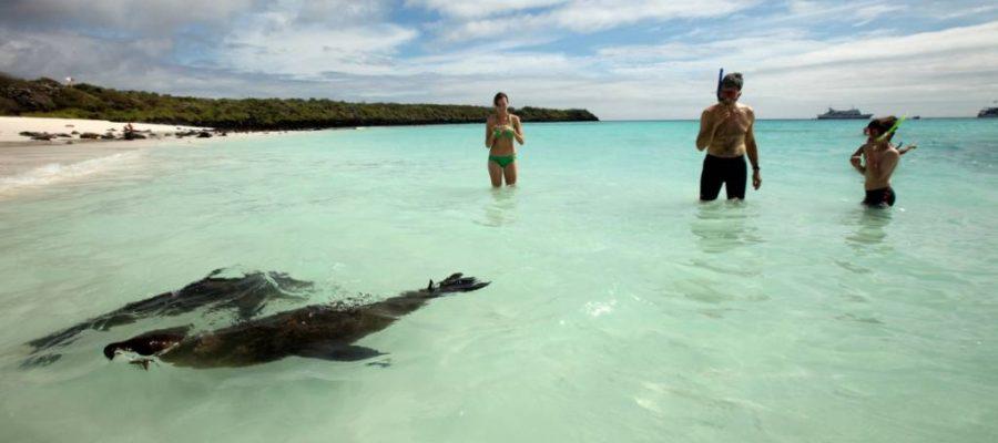 Spielfreudige Schnorchelbegleiter - die Seelöwen auf der Galapagos-Insel Española